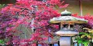 Feng Shui Garten gestalten