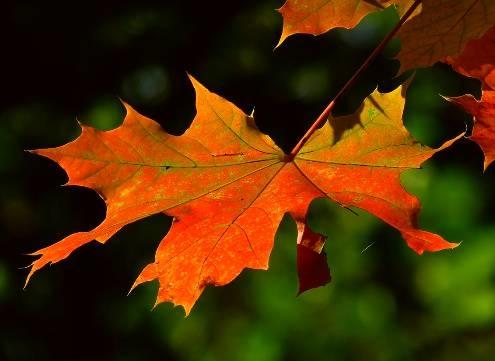 Feng Shui gegen Herbst-Melancholie